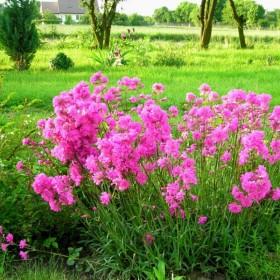 Wspomnienie kończącego się lata - ogród
