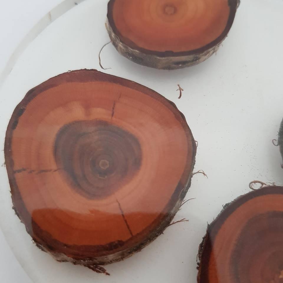 Dekoracje, Piękne kolorowe podkładki pod kubek - Przeźroczysta podkładka pod kubek z drzewem