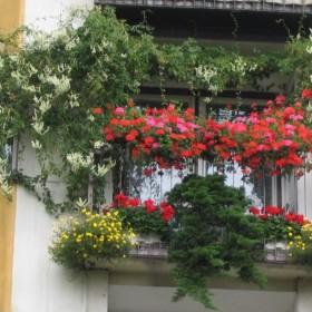 Balkon w baardzo dużym blokowisku