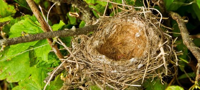 Zanim usuniesz gołębie gniazdo, sprawdź co mówi o tym prawo