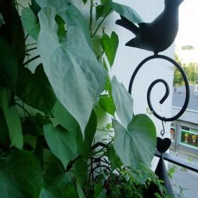 na balkonie wilec &#x3B;)
