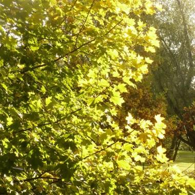 ................i jeszcze zielone drzewo................