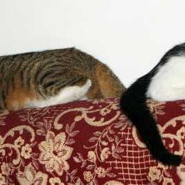 Koty - niezaprzeczalna dekoracja mieszkania.