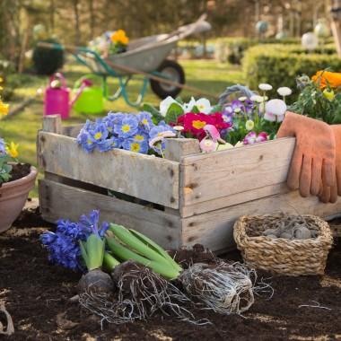 Marzysz o pięknym balkonie już na początku marca? To możliwe. Na rynku znajdziemy wiele roślin, które kwitną wczesną wiosną. Potocznie uważa się, że balkony można bezpiecznie obsadzać po tzw. zimnej Zośce, czyli w połowie maja. Na szczęście, na każdą porę roku znajdzie się dekoracyjne rozwiązanie. Przedstawiamy najbardziej sprawdzone gatunki, które będą doskonałą ozdobą naszego otoczenia.A jakie kwiaty znajdą się na waszym wiosennym balkonie? Jakie gatunki dodalibyście do naszej galerii? źródło zdjęć: 123rf.com