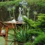 Pozostałe, Smaczne lato :) - Agapanty zaczynają kwitnąć :)