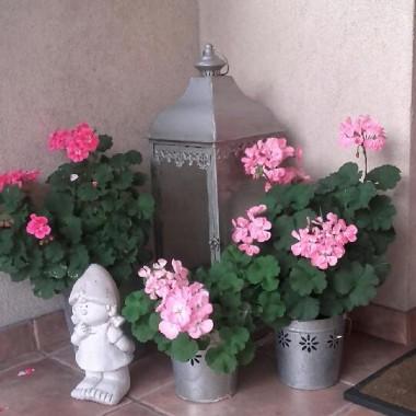 a tu moja Małgosia w towarzystwie różowych kwiatów :)