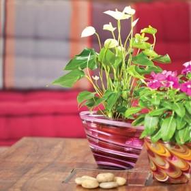 Doniczki na kwiaty