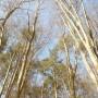 Dekoratorzy, Czekając na wiosnę .................. - ..............i las...............