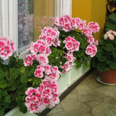 Balkonowy ogródek