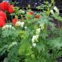 Pozostałe, Niezapominajkowo-tulipanowa galeria wiosenna....