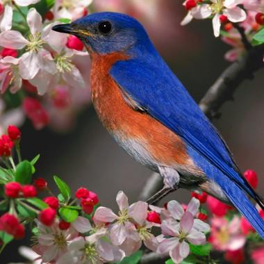 WIOSNA - ptaki - moja miłość &#x3B;)