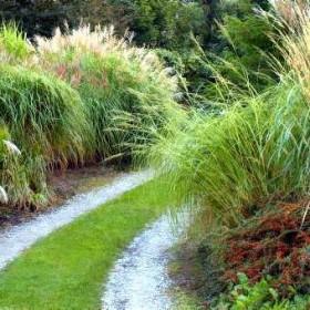 ogrody, trawy