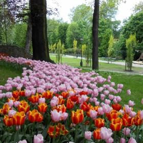 Moje miasto na wiosnę