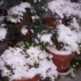 Zima w moim ogrodzie.