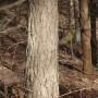 Leśne klimaty, Marcowy las
