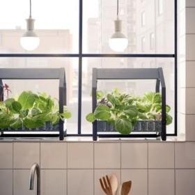 Uprawiaj domowy ogródek przez cały rok z nową kolekcją IKEA
