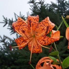 Kwiaty Latem