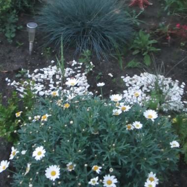 Ogród trochę się zmienił, prawda?  Deszcze robią swoje, rośliny szybko rosną. Ja mam też co robić, lubię to...
