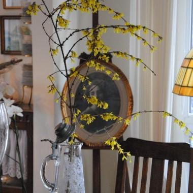 Forsycja w kilka dni obsypała się kwiatami w ciepłym domu :)