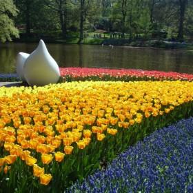 Uwielbiam tulipany...   &#x3B;-D