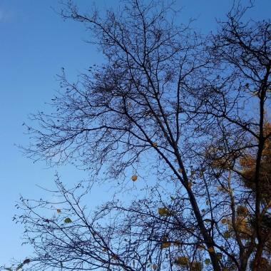 ...............i bezlistne drzewa.................