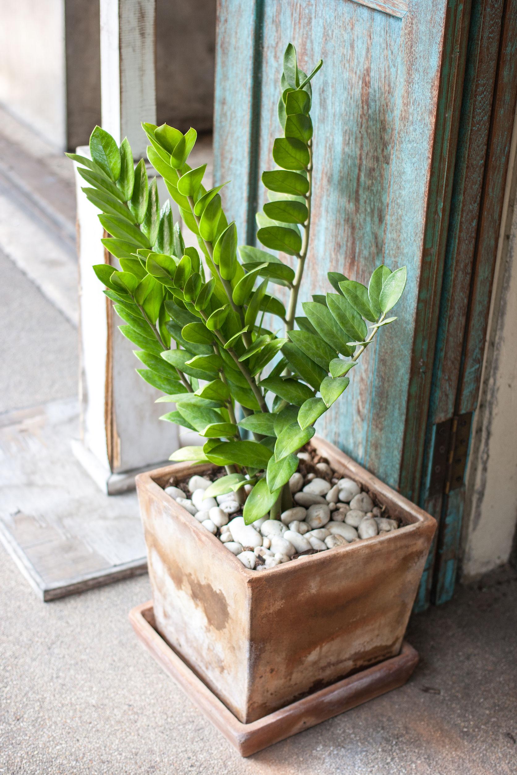 Tylko na zewnątrz Życiodajne rośliny w biurze - Deccoria.pl AC88