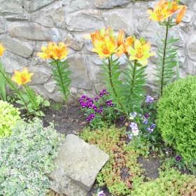Czerwcowy ogród