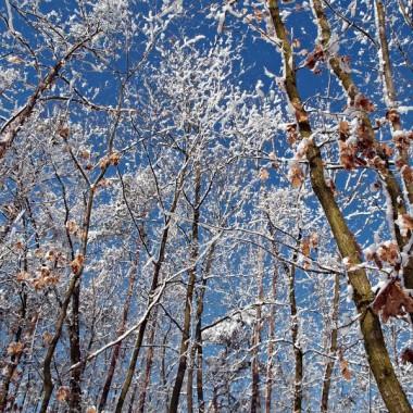 Las zimowy