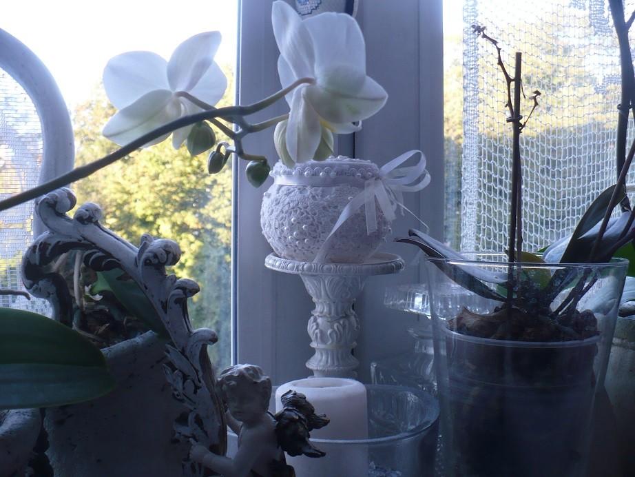 Pozostałe, Galeria jesienna.................październikowa............. - .............i puzderko koronkowe białe..........