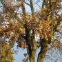 Pozostałe, Listopadowe małe radości................ - .............i dąb.....................