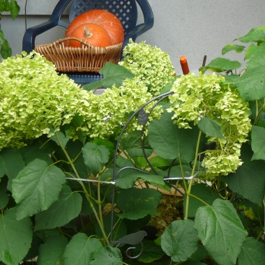 Moja jesienna codzienność. Nie dekoruję, zwyczajnie układam owoce na stole - by były pod ręką, by po nie sięgnąć. Kuchnia, spiżarnia, fragment sypialni, ogród. Moje kwiaty, te żywe i te na tkaninach. Zapraszam.