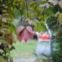 Pozostałe, .....a lasek rudzieje - :)