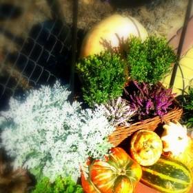Prawie jesienna!