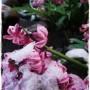 Pozostałe, wiosna oprószona śniegiem&#x3B;