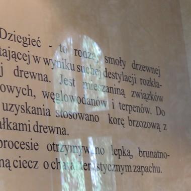 FRAGMENT HISTORII LEŚNICTWA