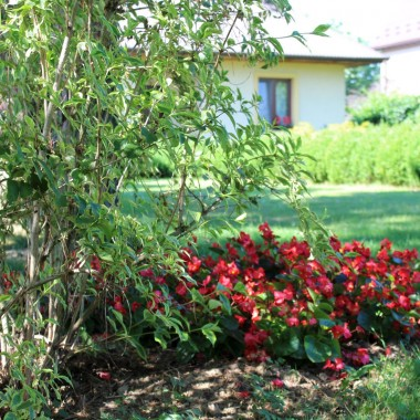 Zapraszam  do moich ogrodowych zakątków :) Pogoda jest cudowna tej wiosny...A w domku ... anioł-prezent od dzieci na Dzień Matki i nowy nabytek - ogromne chwosty,upolowane na Allegro :))Zapraszam Dziewczyny i życzę Wam pięknej niedzieli :)