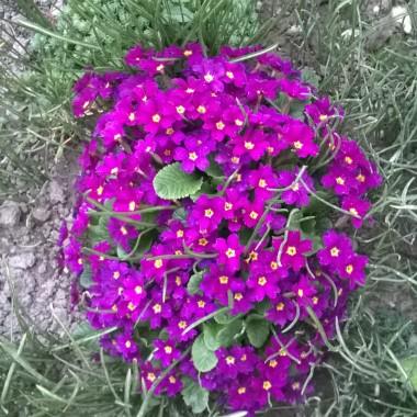 wiosna na działce &#x3B;)