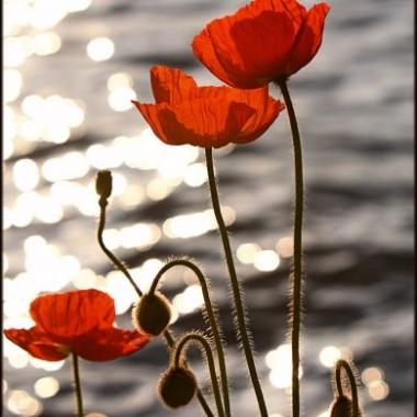 kwiaty :)))))