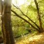 Rośliny, Złoto jesieni i moje zielone bombki..... - ..............i jesień nad stawem.............
