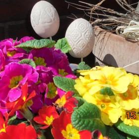 Kwiecień w moi m ogródku