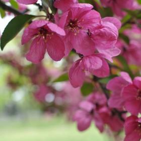 Tęsknota za kolorami wiosny,lata...