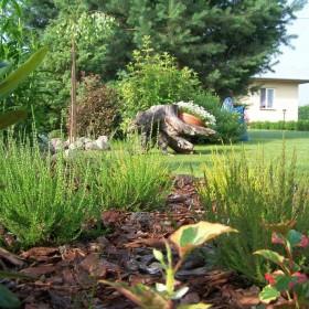 Mój skromny letni ogród :)