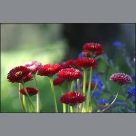wiosenne kwiatki