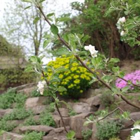 w ogrodach