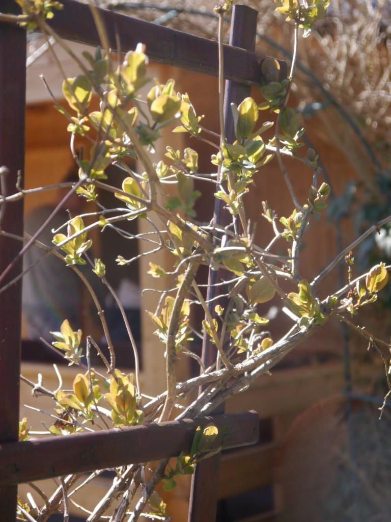 Balkon, Balkonowe chwile czas zacząć - A na działce rośliny też odżyły