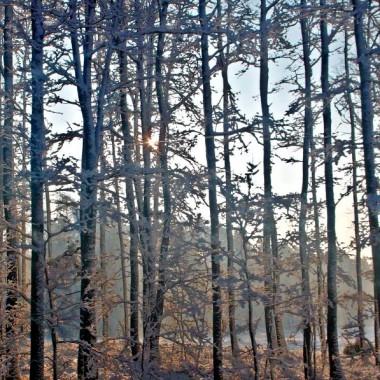 zapraszam do słonecznego lasu- las mam  prawie za płotem