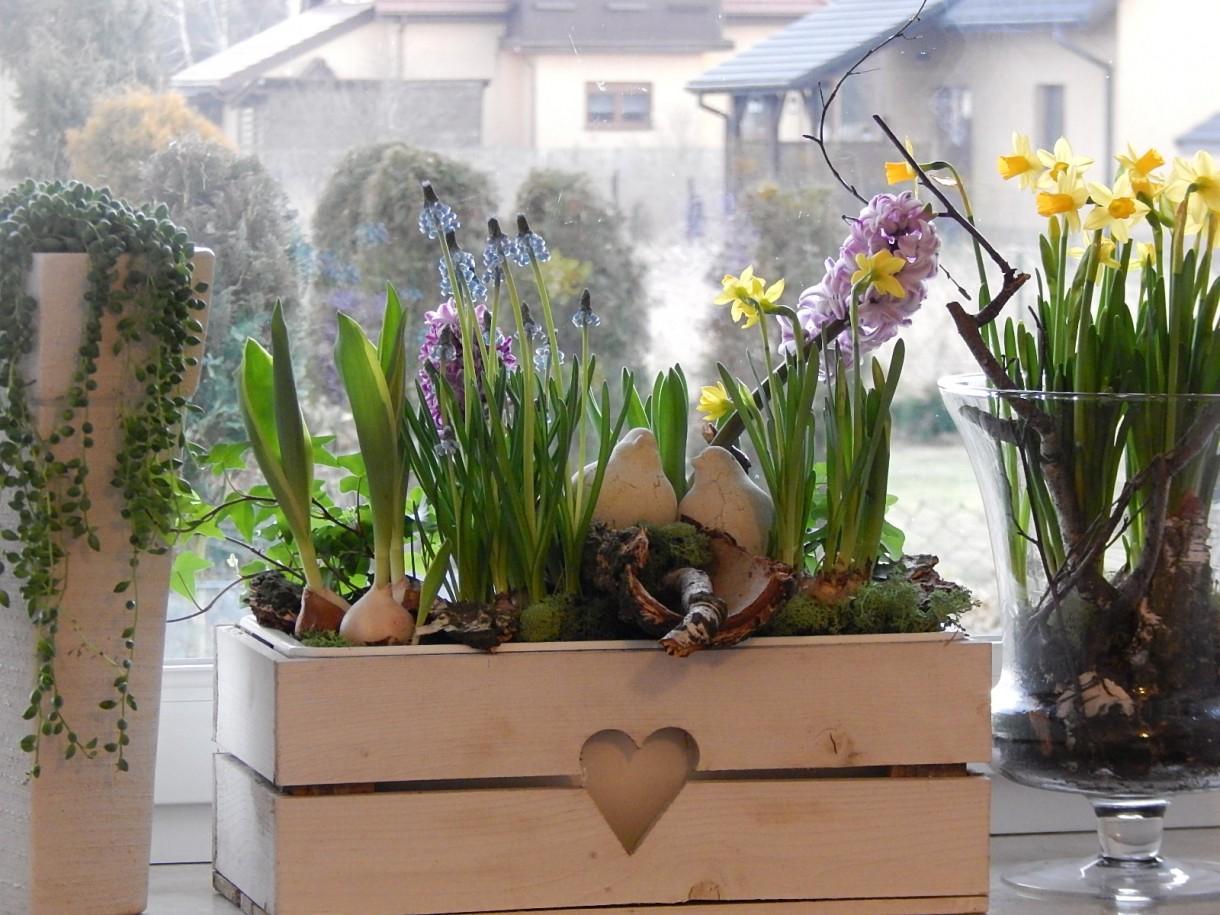 Rośliny, MYŚLI KOLOROWE...