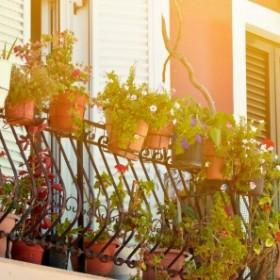 Wszystko co musisz wiedzieć o zimowaniu roślin balkonowych