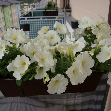 balkon - mój azyl:)