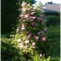 Pozostałe, Ogród o zachodzie słońca - przed domem...